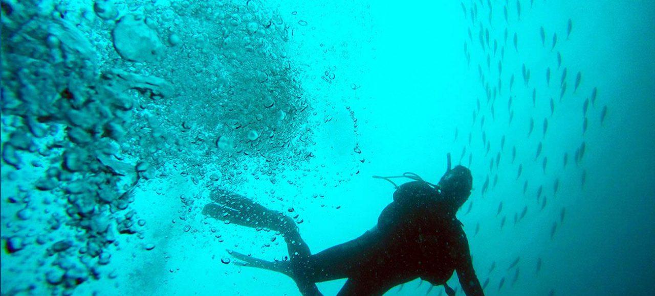 Aqua Ventura PADI Dive Master
