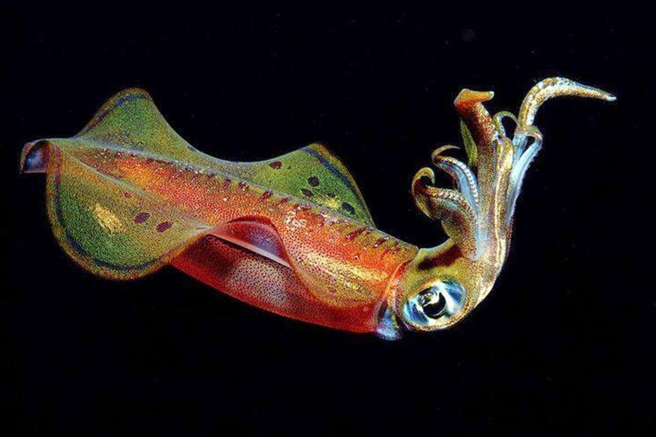 Aqua Ventura Diving Night Dive