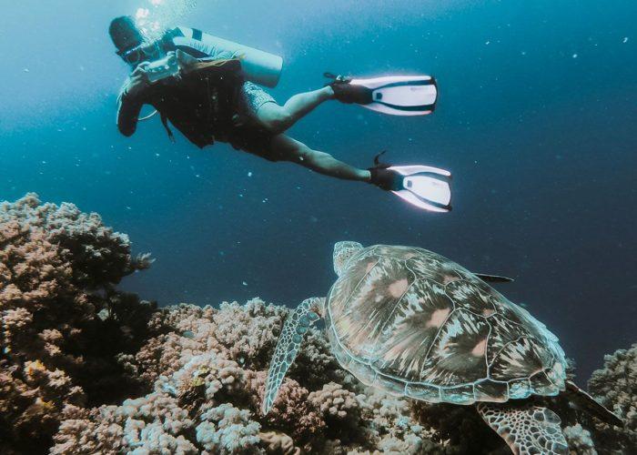 Apo Island Diving Day Tour