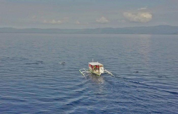 Aqua Ventura Diving-Dolphin Watching & Manjuyod Sand Bar Tour