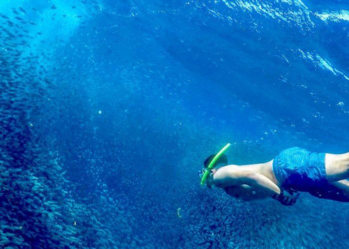 Moalboal Sardines Run