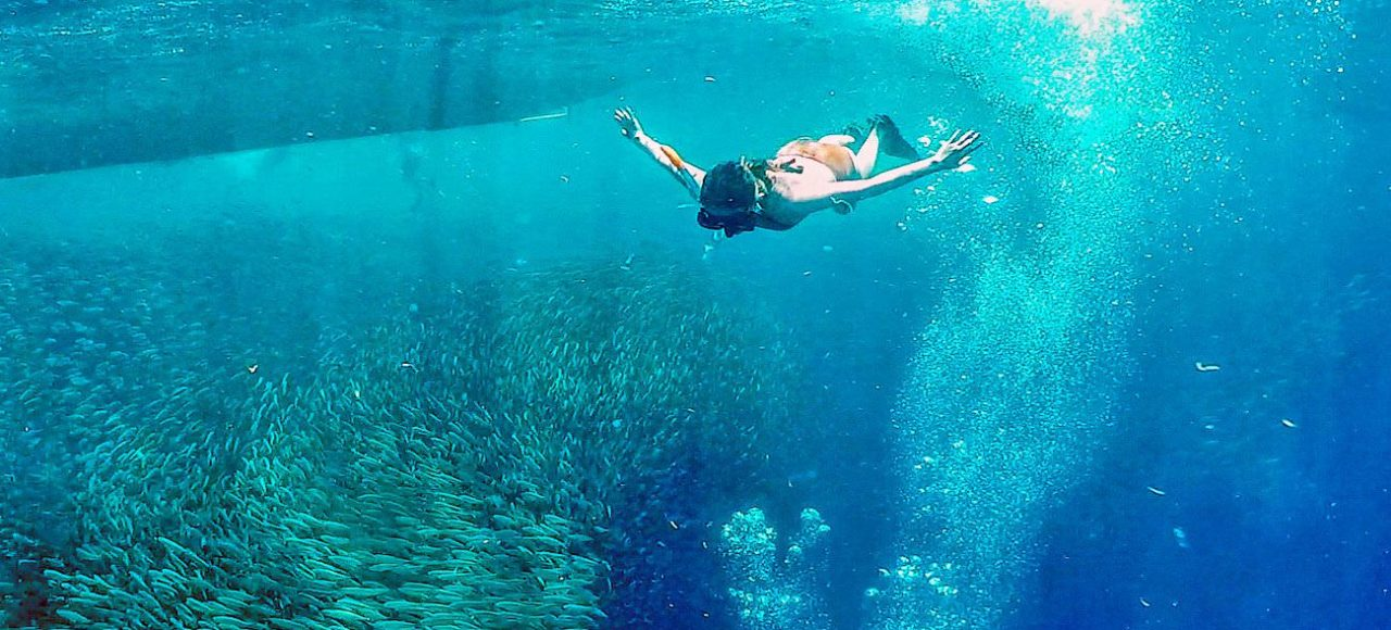Aqua Ventura Diving-Moalboal Sardines Run