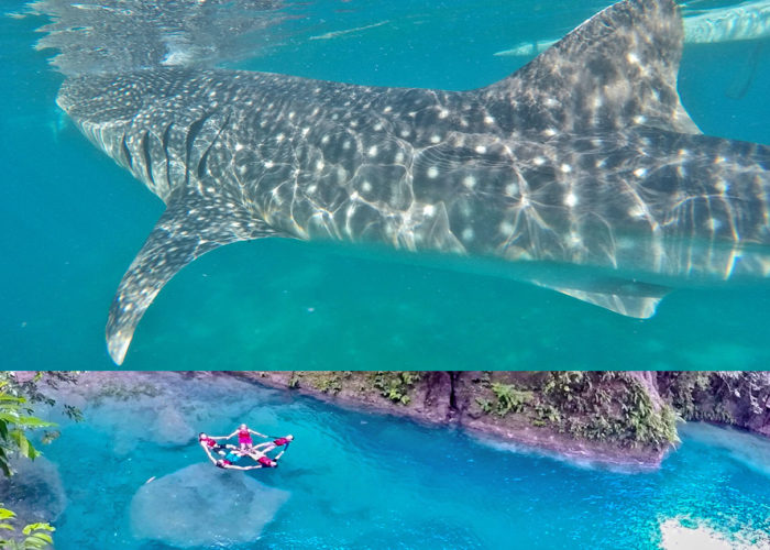 Aqua Ventura Diving-Oslob & Kawasan